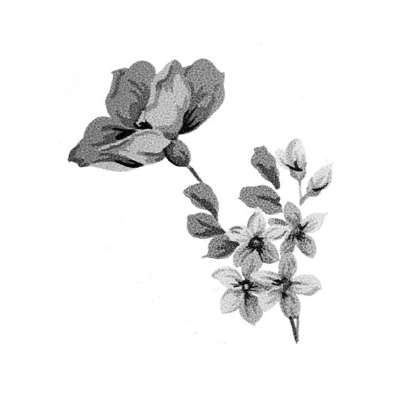 Top 10 Best Flower PSD Design For Blogger