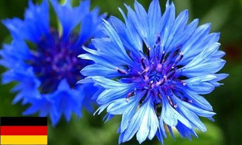 1) Germany -Blue-Violet