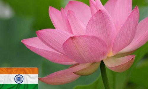 India-Lotus