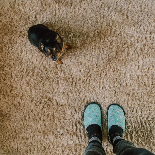 7 Carpet Cleaning Tips You Should Always Remember