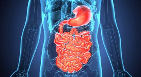 Digestive Health At Home